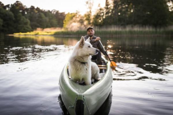 Kanoen mit Hund im Altmühltal