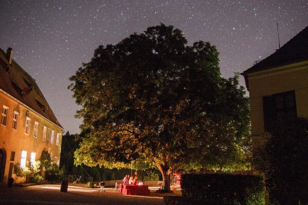 Walnussbaum am Schloss